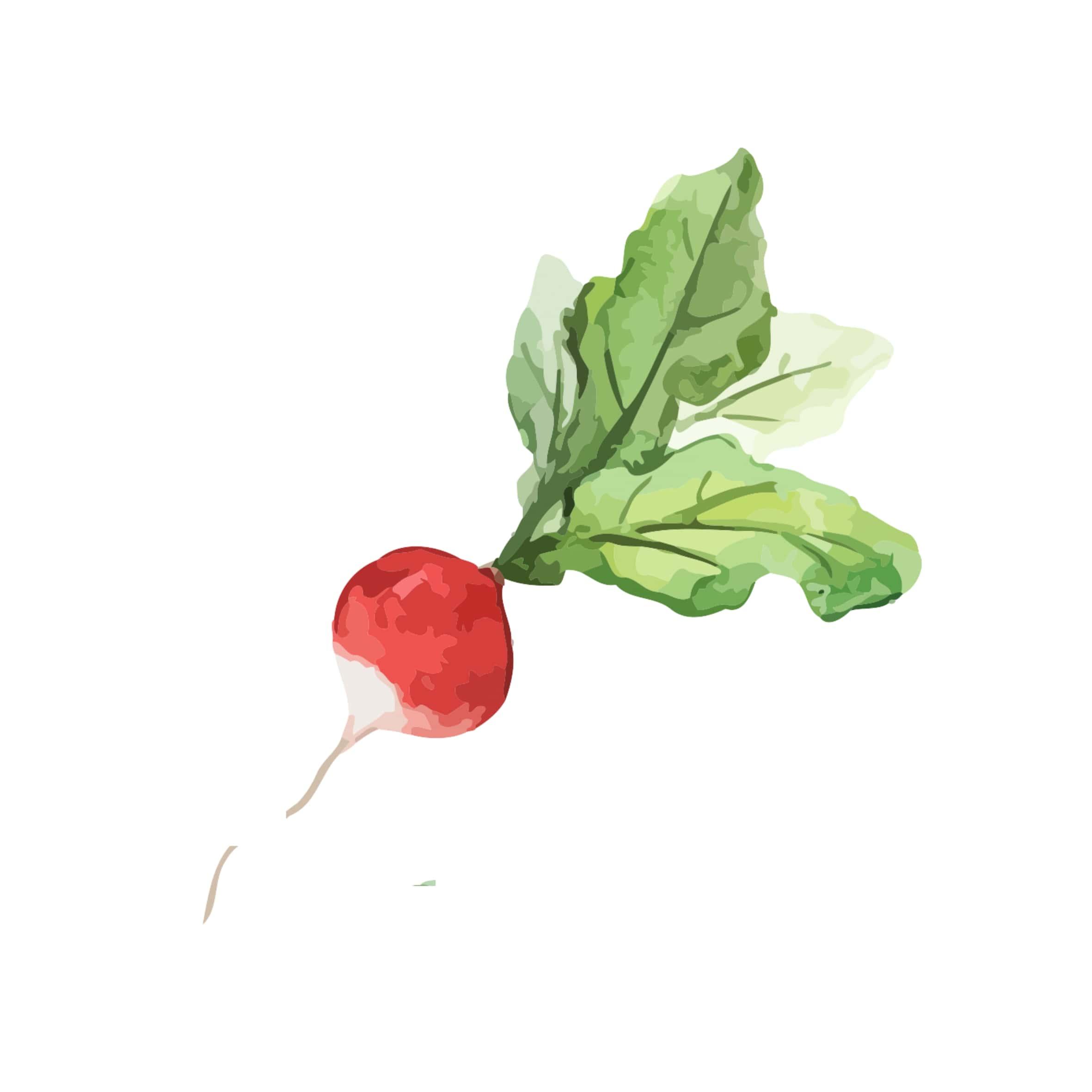 girl meets radish